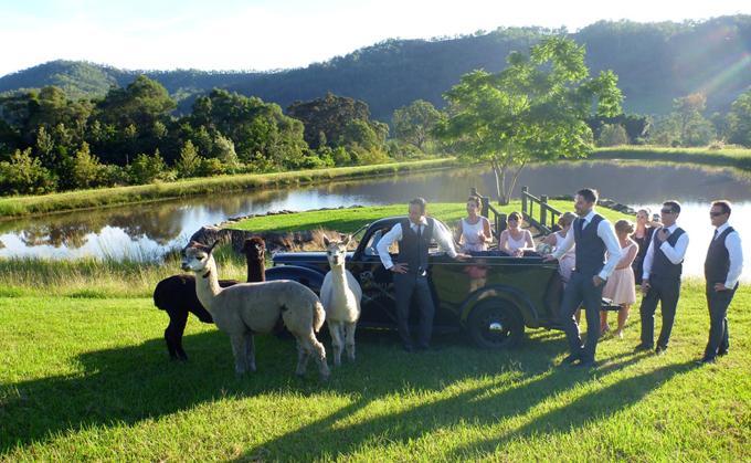 Sarabah_Estate_Vineyard weddings