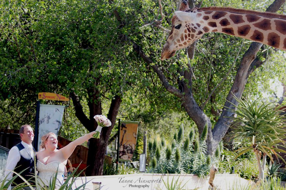 Adelaide_Zoo_weddings